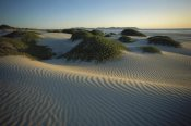 Tui De Roy - Sand dunes stabilized by vegetation, Magdalena Island, Baja California, Mexico