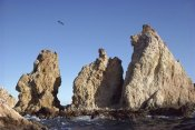 Tui De Roy - Osprey nests on sea stacks, Gulf Coast, Sea of Cortez, Mexico