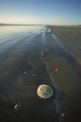 Tui De Roy - Sand Dollar with wave patterns at low tide, Baja California, Mexico