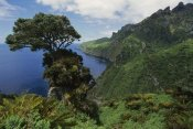 Tui De Roy - The Glenn, site of the early meterological station, Gough Island, South Atlantic