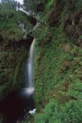 Tui De Roy - Waterfall draining rain-drenched coastal plateau, Gough Island, South Atlantic