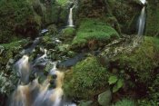 Tui De Roy - Waterfalls among ferns and mosses, Gough Island, South Atlantic