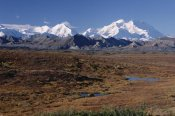 Michael Quinton - Tundra and Mt Denali, in autumn Denali National Park, Alaska