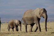 Tim Fitzharris - African Elephant mother and calf, Kenya