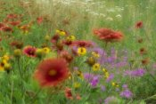 Tim Fitzharris - Gaillardia, coreopsis and pointed phlox, blowing in the wind, Texas