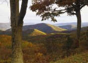 Tim Fitzharris - Autumn forest at Brown Mountain, Shenandoah National Park, Virginia