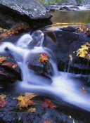 Tim Fitzharris - Autumn leaves in Little River, Great Smoky Mountains NP Tennessee