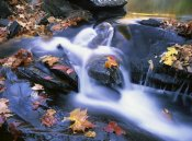 Tim Fitzharris - Autumn leaves in Little River, Great Smoky Mountains NP, Tennessee