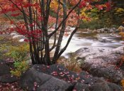 Tim Fitzharris - The Swift River, White Mountains National Forest, New Hampshire