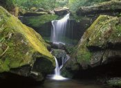 Tim Fitzharris - Cascade near Grotto Falls, Great Smoky Mountains National Park, Tennessee