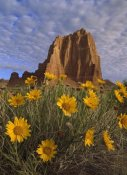 Tim Fitzharris - Temple of the Sun with Sunflowers, Capitol Reef National Park, Utah
