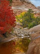 Tim Fitzharris - Maple and Cottonwood autumn foliage, Zion National Park, Utah