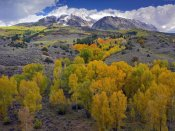 Tim Fitzharris - Fall colors at Chair Mountain, Colorado