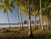 Tim Fitzharris - Palms at Playa Carrillo, Guanacaste, Costa Rica