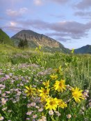 Tim Fitzharris - Orange Sneezeweed and Smooth Asters and Gothic Mountain, Colorado