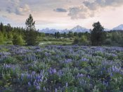 Tim Fitzharris - Lupine meadow, Grand Teton National Park, Wyoming