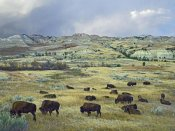 Tim Fitzharris - American Bison herd grazing on praire, Theodore Roosevelt NP, North Dakota