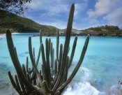 Tim Fitzharris - Cactus growing along Trunk Bay,  Virgin Islands