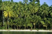 Konrad Wothe - Palm trees along white sand beach, Irian Jaya, Indonesia