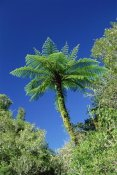 Konrad Wothe - Tree Ferns near Bullock Creek, Paparoa NP, New Zealand