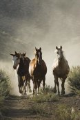 Konrad Wothe - Horse group of four approaching camera, Oregon