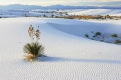 Konrad Wothe - Soaptree Yucca in gypsum sand, White Sands National Monument, New Mexico
