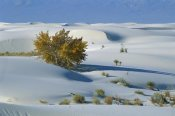 Konrad Wothe - Fremont Cottonwood and gypsum dunes, White Sands NM, New Mexcio