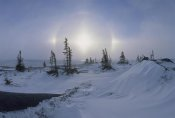 Konrad Wothe - Spruce forest in snow with sundogs, Hudson Bay, Canada