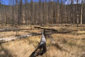 Gerry Ellis - Deer Plateau after 1990 forest burn near Blackmail, Yellowstone NP, Wyoming