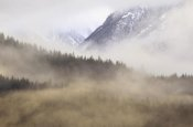 Gerry Ellis - Fog in old growth forest, Chilkat River Wilderness, Alaska