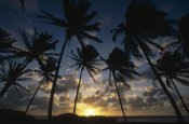 Gerry Ellis - Coconut Palm trees at sunrise, St Vincent Island, Lesser Antilles