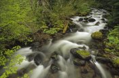 Gerry Ellis - Still Creek in spring,  Mt Hood National Forest, Oregon