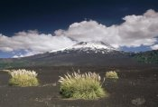 Gerry Ellis - Pampas Grass islands in old lava flow, Llaima Volcano, Conguillio NP, Chile