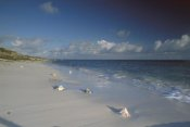 Gerry Ellis - Conch shell on Seven Mile Beach, Grand Turk Island, Turk and Caicos Islands