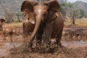 Gerry Ellis - Orphaned Isholta playing in mud bath, Tsavo East National Park, Kenya