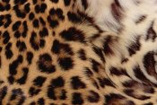 Gerry Ellis - Jaguar fur detail, Washington Park Zoo, Portland, Oregon