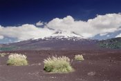 Gerry Ellis - Pampas Grass islands in old lava flowl Llaima Volcano, Conguillio NP, Chile