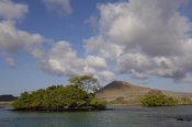Pete Oxford - Palo Santo trees, Mangroves and cinder cone, Galapagos Islands, Ecuador