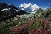 Colin Monteath - Wildflowers and Kangshung Glacier, Mt Chomolonzo in background, Tibet