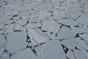 Colin Monteath - Aerial view of large ice floes, summer pack ice breaking up, Antarctica