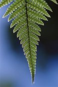 Ingrid Visser - Fern frond, New Zealand