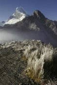 Grant Dixon - Frozen grasses and Nevado Chopicalqui peak, Cordillera Blanca, Peru