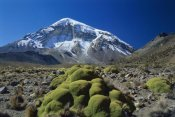 Grant Dixon - Cushion plant and Nevado Sajama, Sajama National Park, Bolivia