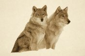 Tim Fitzharris - Timber Wolf portrait of pair sitting in snow, North America - Sepia