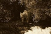 Konrad Wothe - Grizzly Bear fishing, Brooks River Falls, Katmai NP, Alaska - Sepia