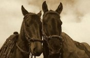 Pete Oxford - Horses pair belonging to Chagras, Andes Mountains, Ecuador - Sepia