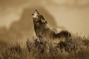 Tom Vezo - Timber Wolf adult howling, Teton Valley, Idaho - Sepia