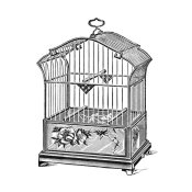 Catalog Illustration - Etchings: Birdcage - Gable top, rose base.