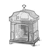 Catalog Illustration - Etchings: Birdcage - Gable top, daisy base.