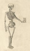 Caspar Bauhin - Human Skeleton with Hourglass